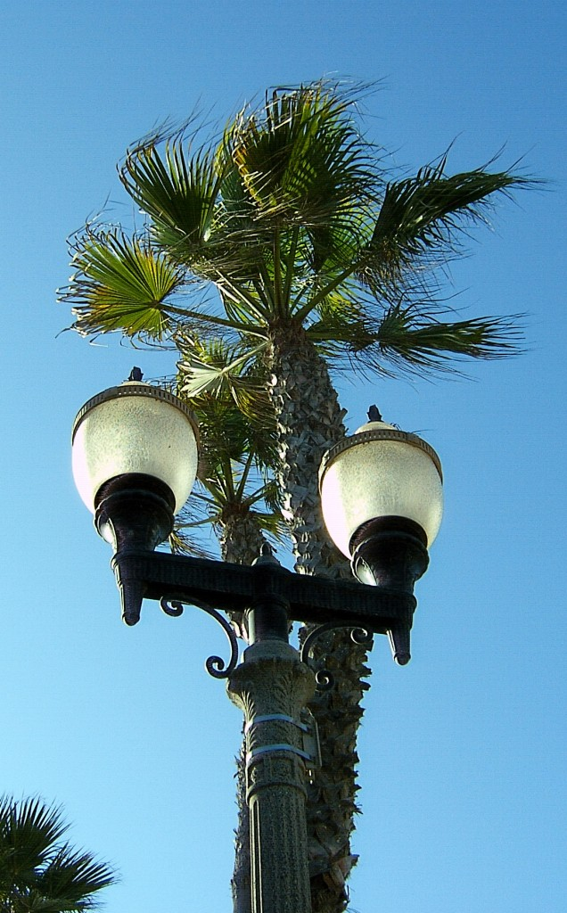 California Street Lamp Palm Tree