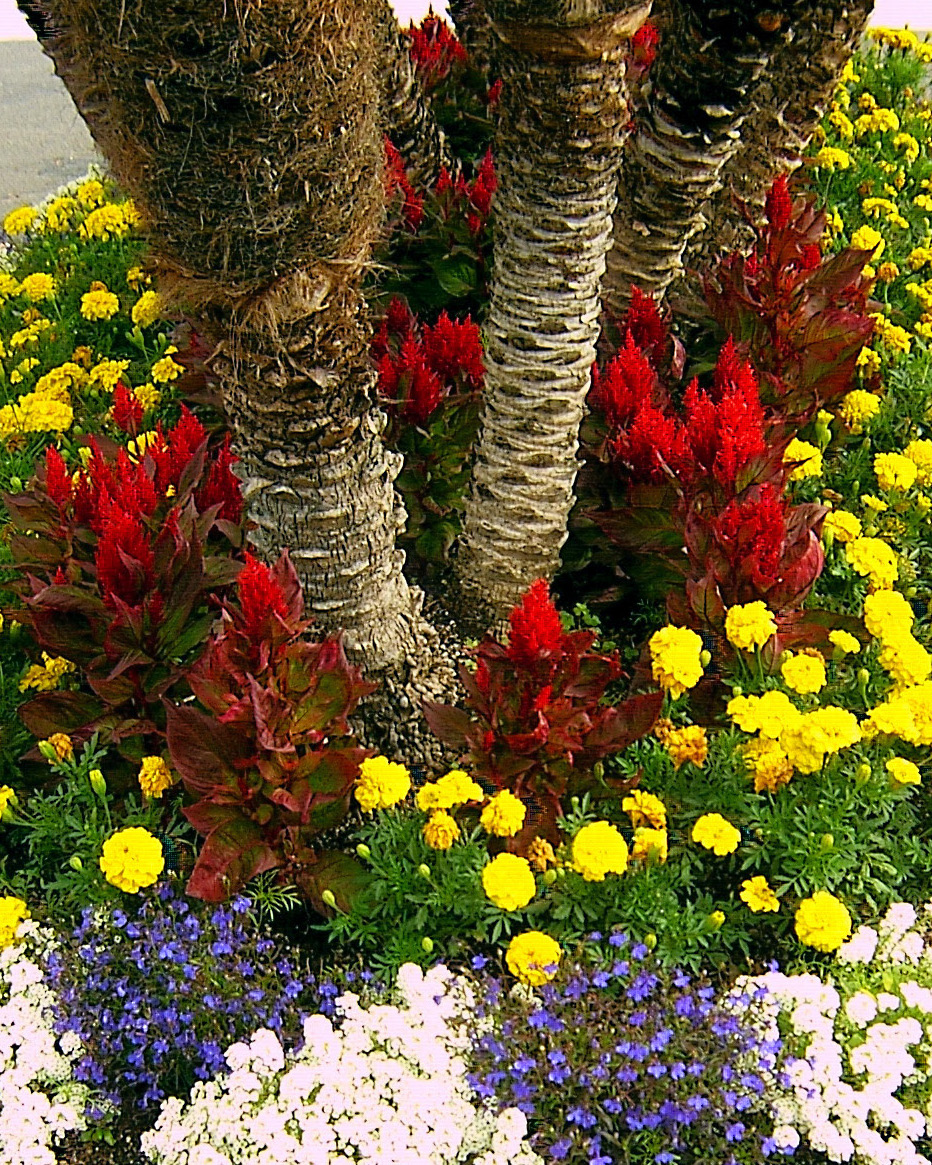 Colorful flowers tree base landscaping for Flower landscape