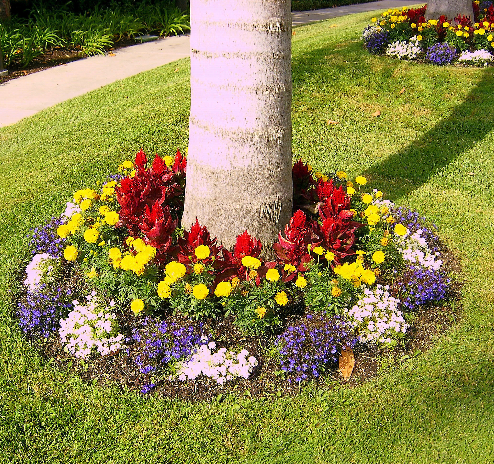 Colorful tree base landscaping for Colorful front yard landscaping