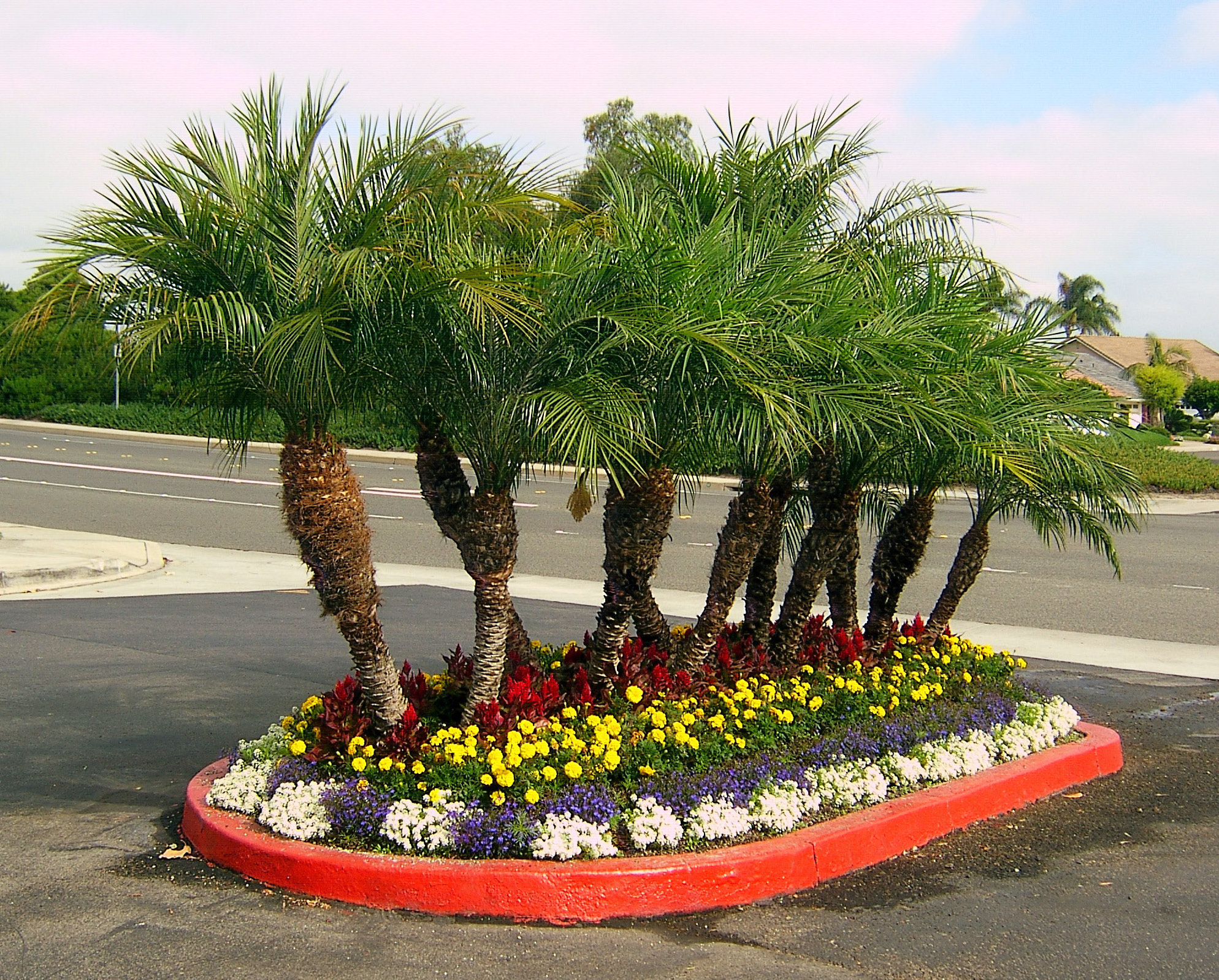 Palm tree floral landscaping love 39 s photo album for Landscape trees