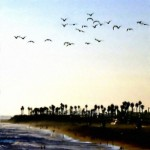 Sea Gulls Over Huntington Beach Painting