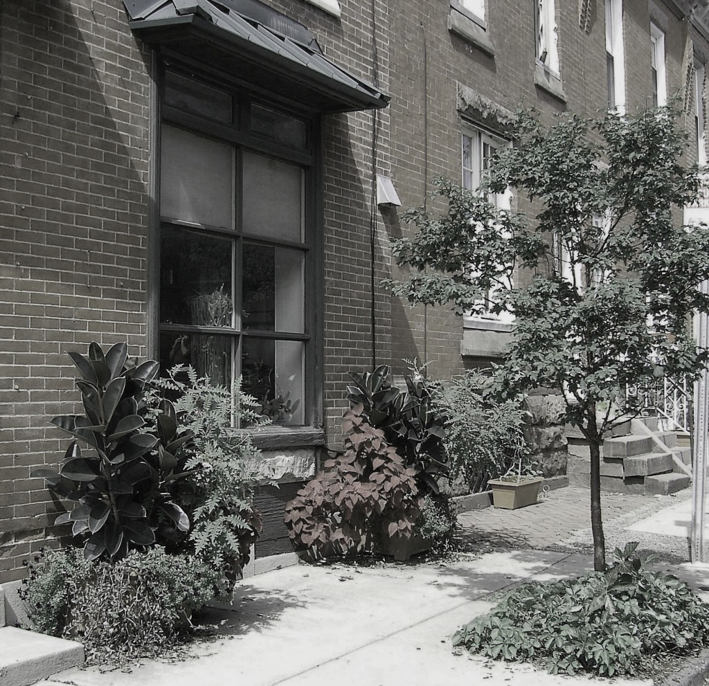 Black & White Urban Plantings For Corner Property