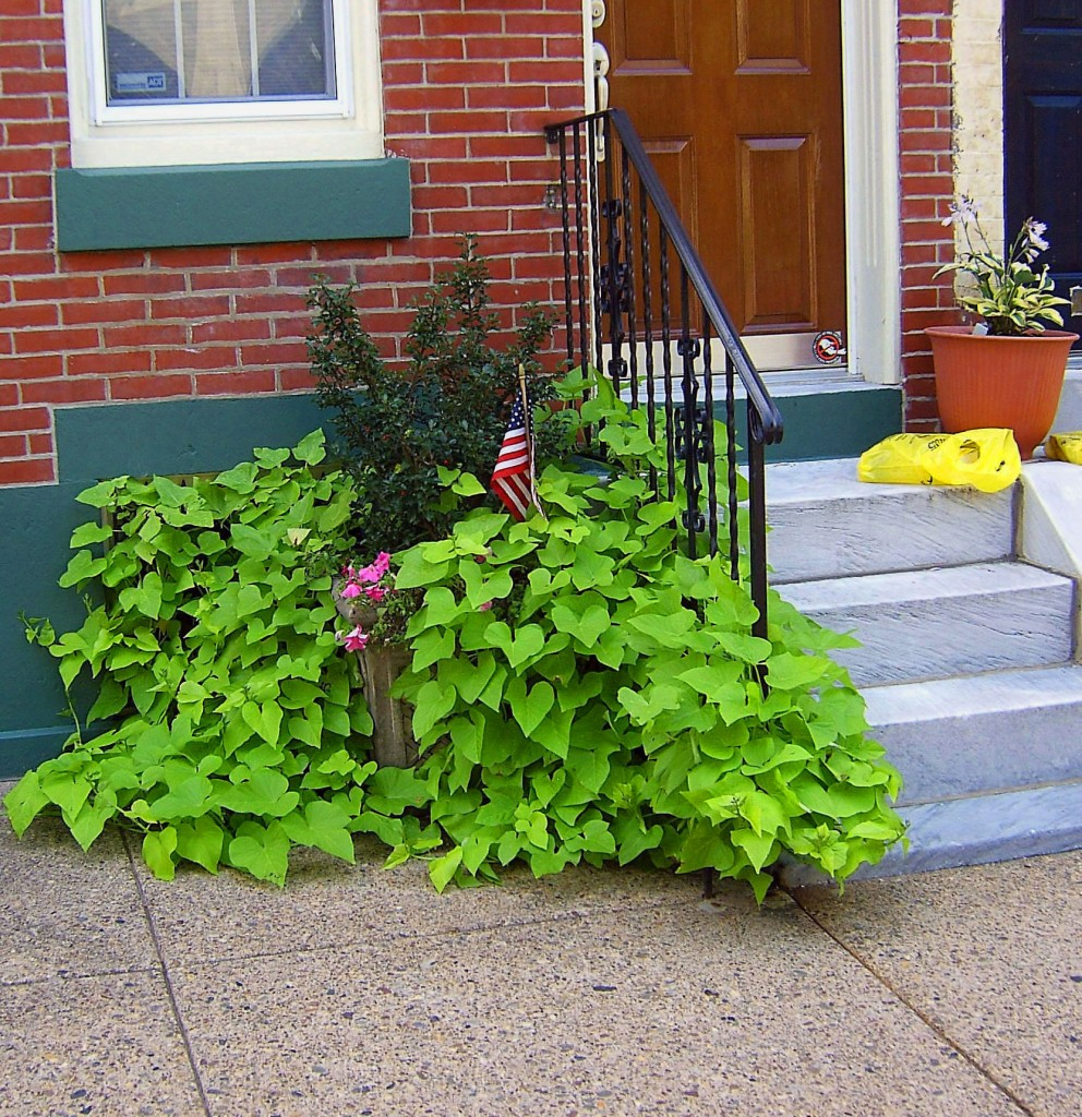 City Side Step Planter