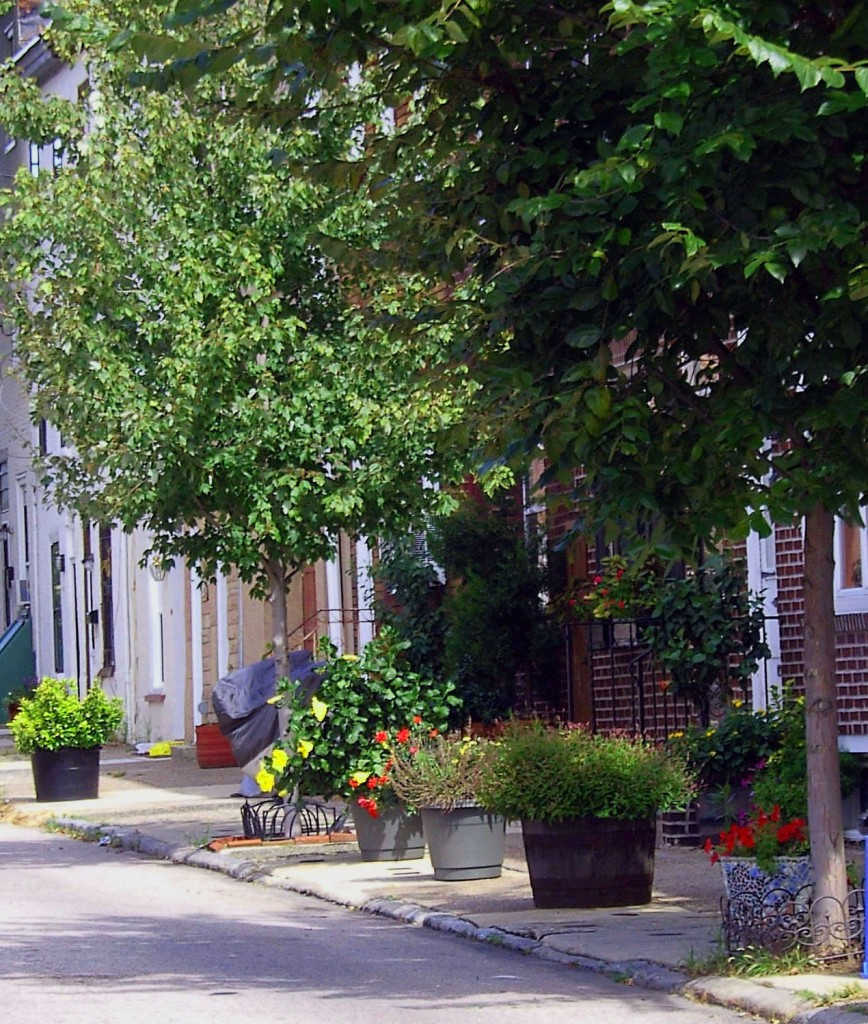 City Street With Curbside Landscaping & Tree Base Flower Bed