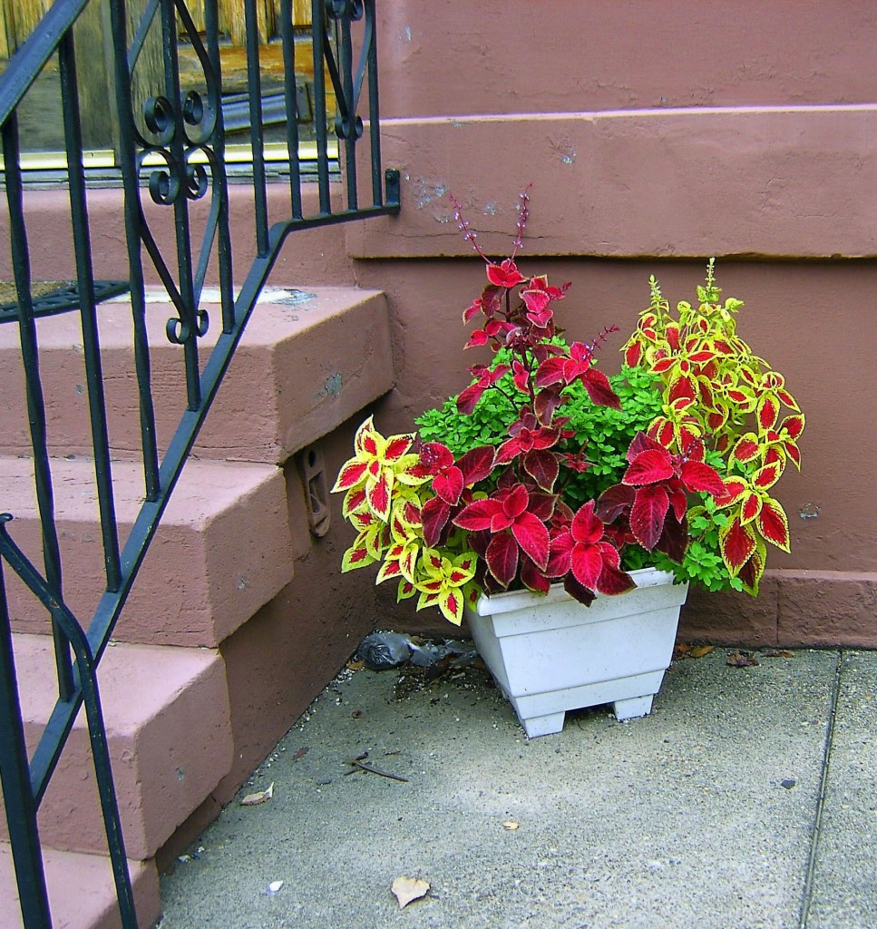 Colorful Single Side Step Planter