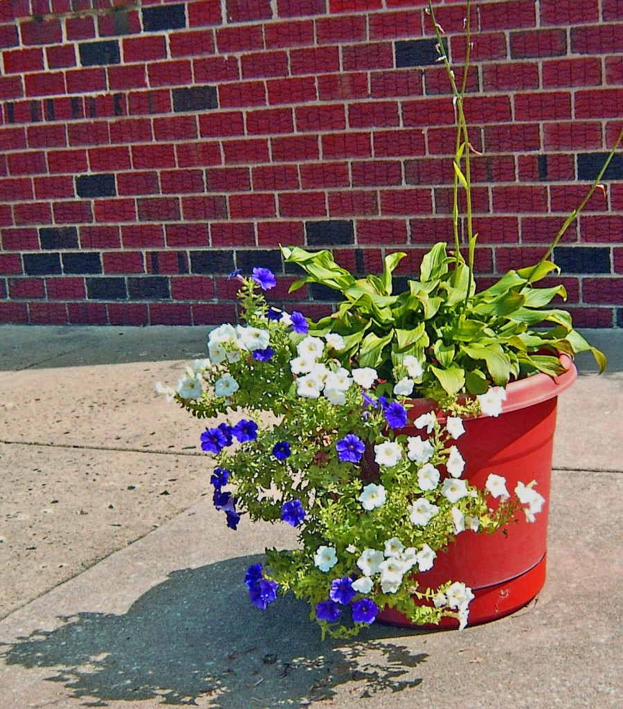 Colorful Single Sidewalk Planter
