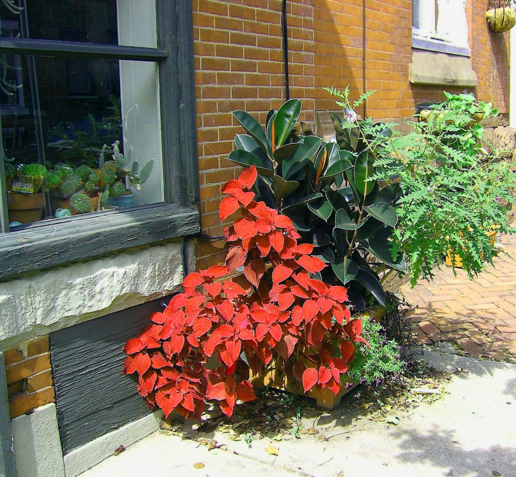 Colourful Sidewalk Plants & CactuS In Window