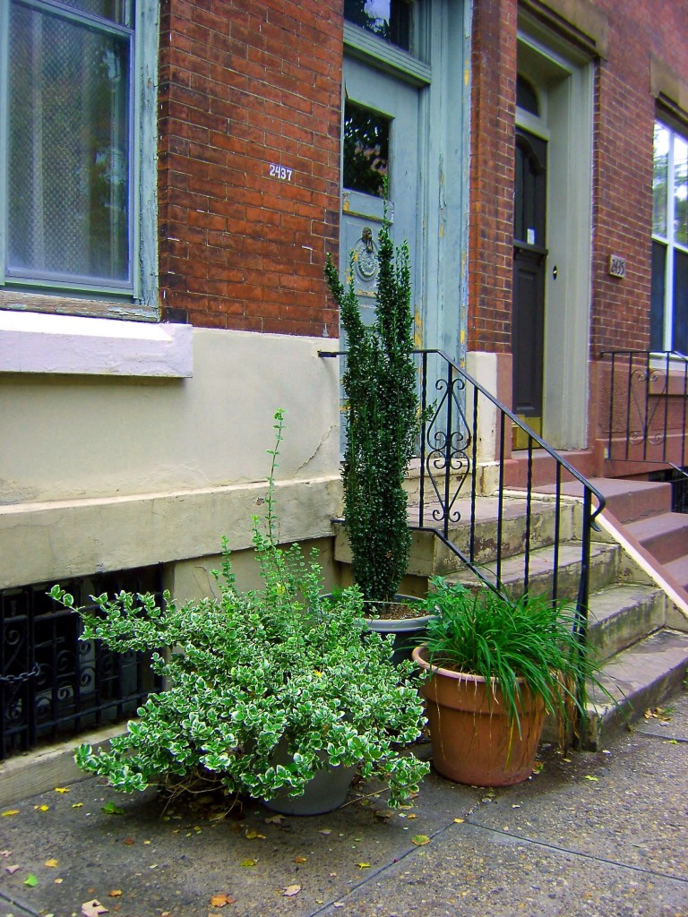 Colourful sidewalk plants in front of colourless house for Plants for front of house