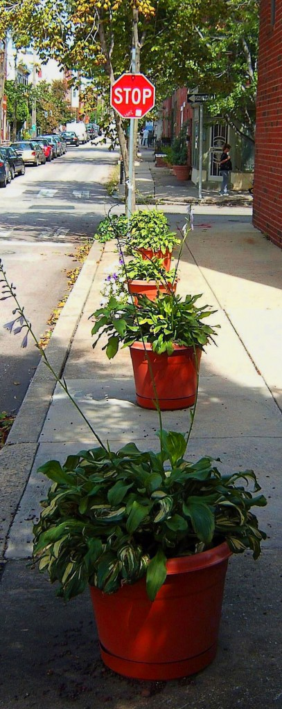 Curb Side Planters Leading To Red Stop Sign