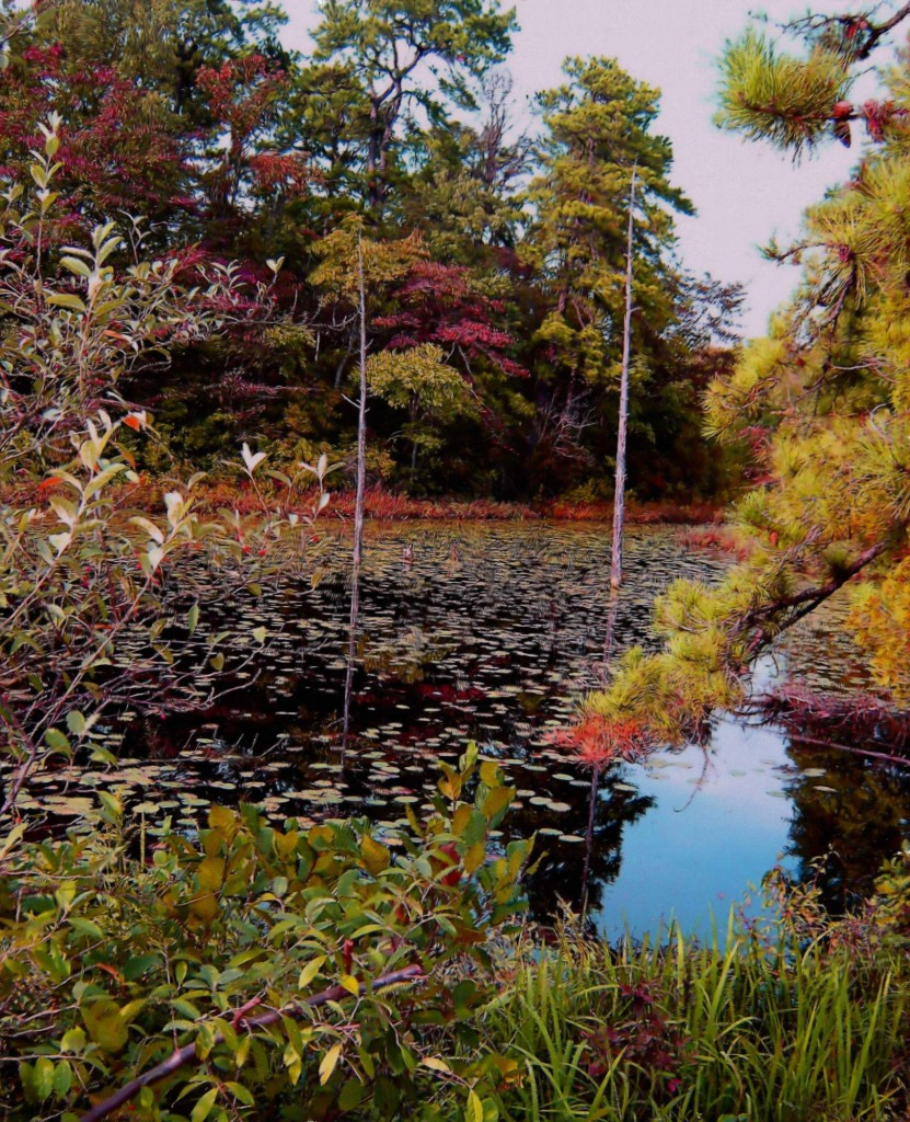 Painting Of Fall Reflections & Lily Pads At South Jersey Pond