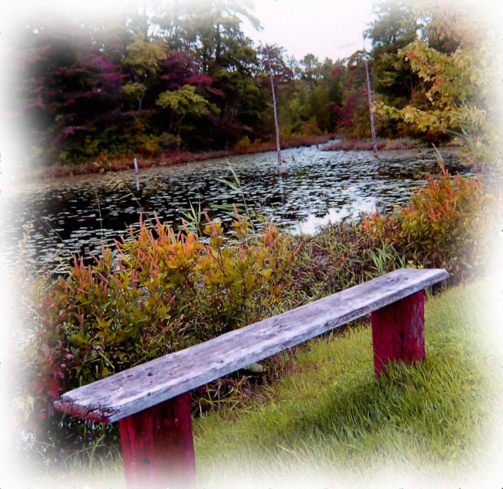 Tranquil Setting At Frog Pond On Park Bench Painting