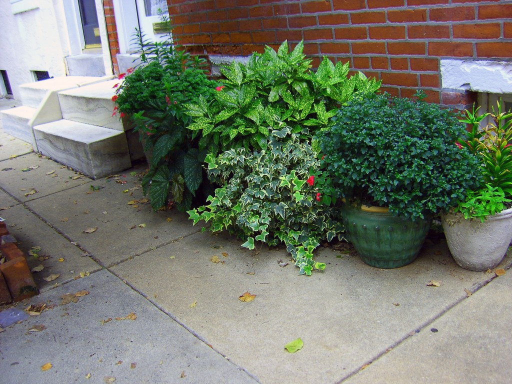 Urban Planters In Front Of Philadelphia Row Home