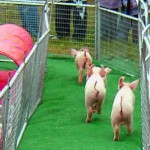 BRINGING UP THE REAR IN PIGLET RACE