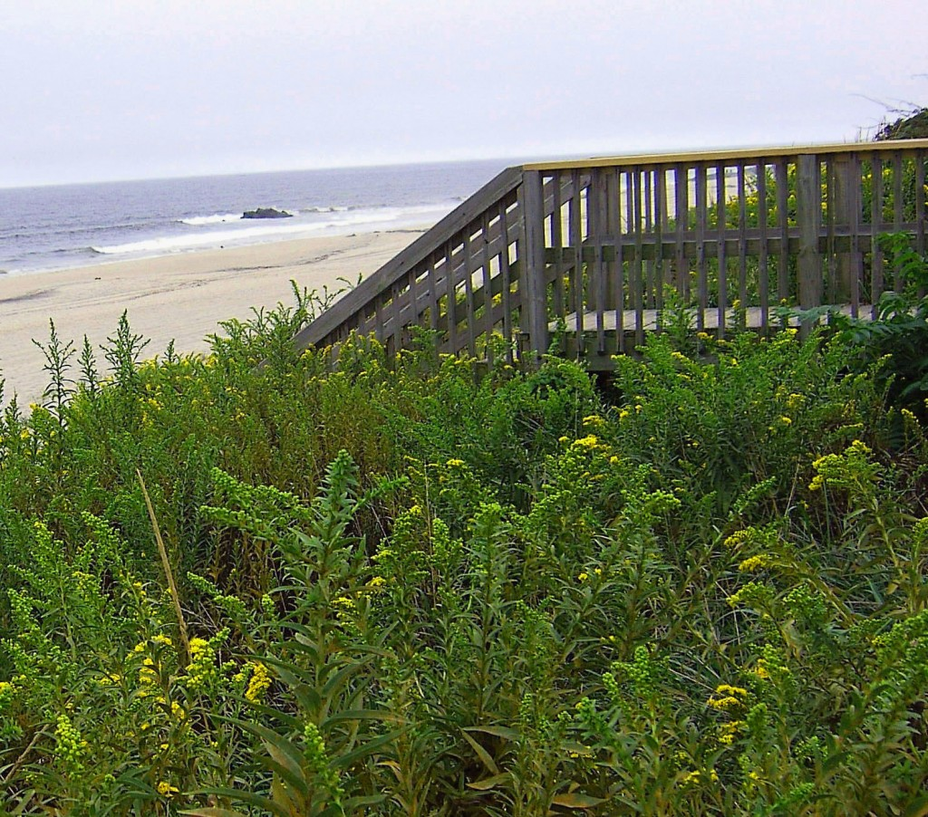COLORFUL VEGETATED DUNE AT BEACH ENTRANCE IN NORTH JERSEY