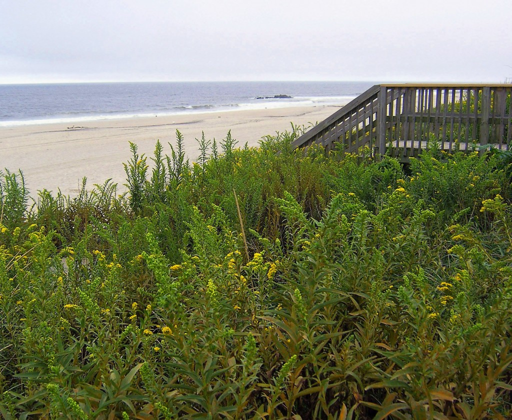 ENTRANCE TO JERSEY SHORE BEACH OVER VEGETATED DUNES