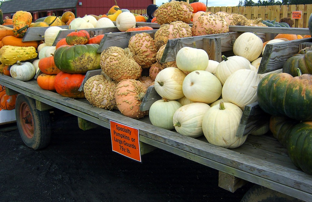 FARM WAGON OF LARGE GOURDS & SPECIALTY PUMPKINS