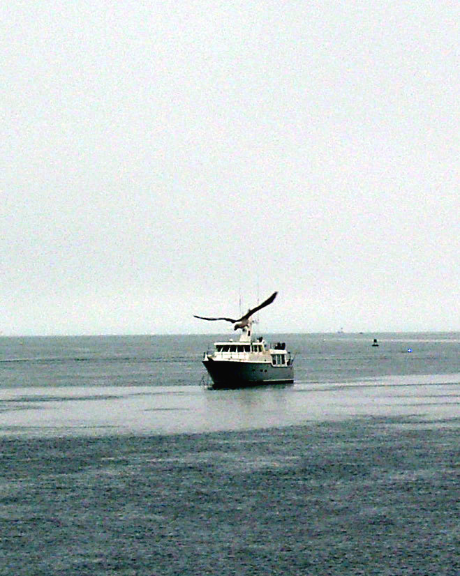 GIANT SEA GULL OVER FISHING BOAT