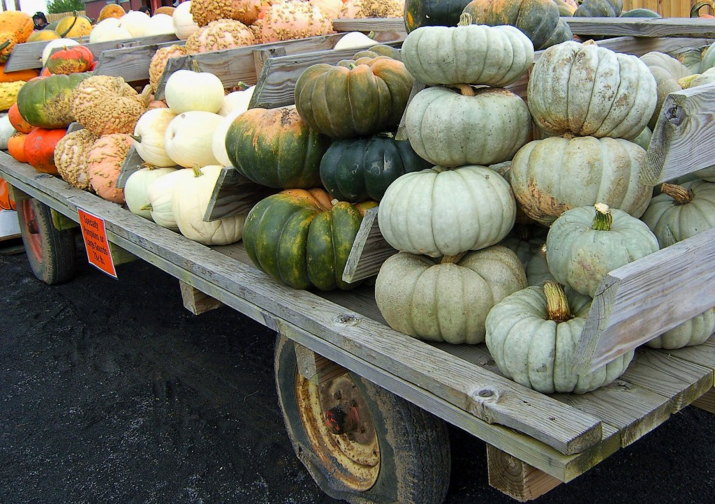 LARGE GOURDS PILED ON FARM WAGON