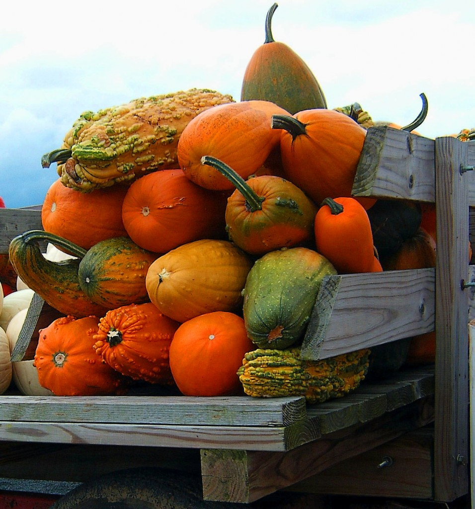 LARGE SIZE GOURDS