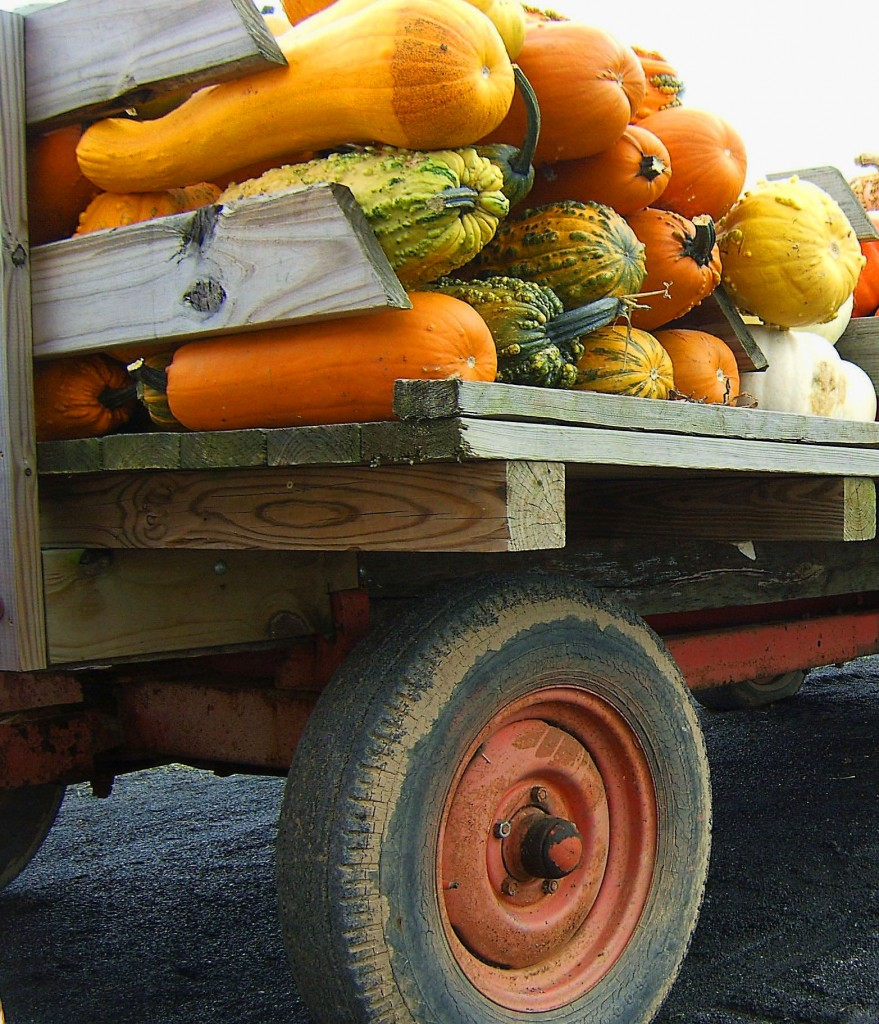 OLD WAGON WITH PUMPKINS & LARGE GOURDS