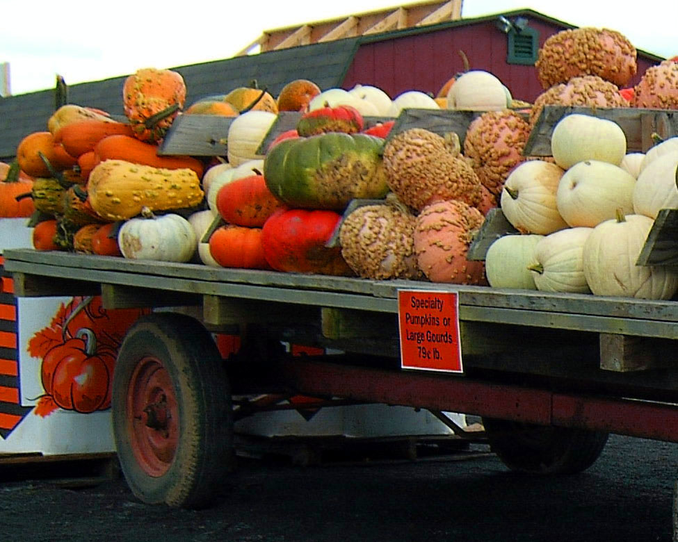 PUMPKIN & GOURD DISPLAY WAGON