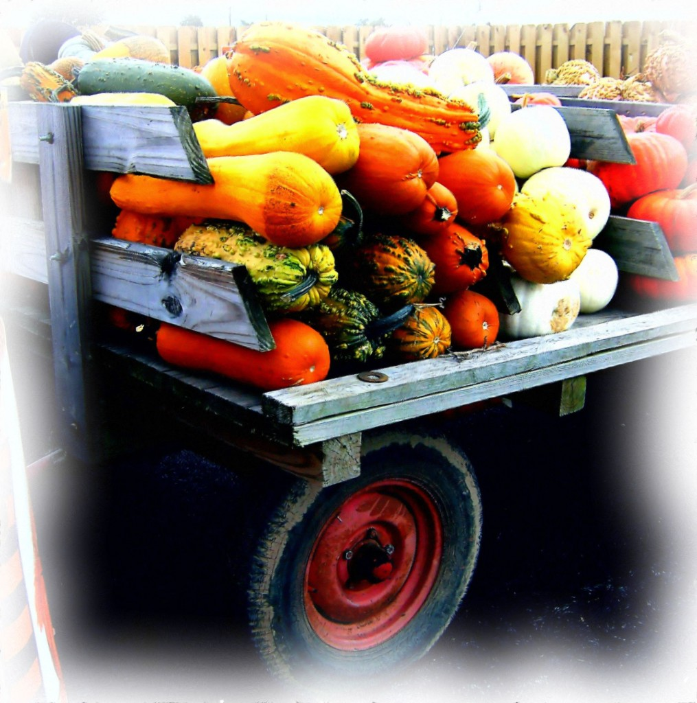 PUMPKINS & GOURDS DISPLAYED ON FARMERS WAGON PAINTING