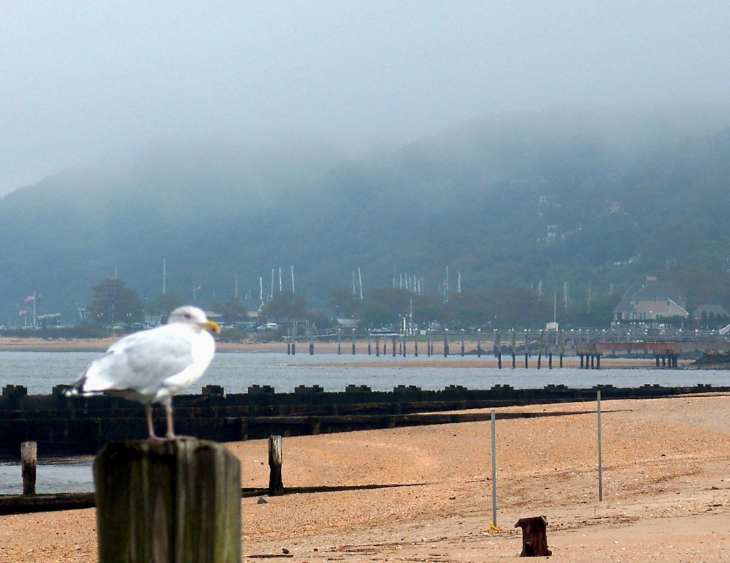 SEA GULL PERCHED ON PILING IN MORNING FOG