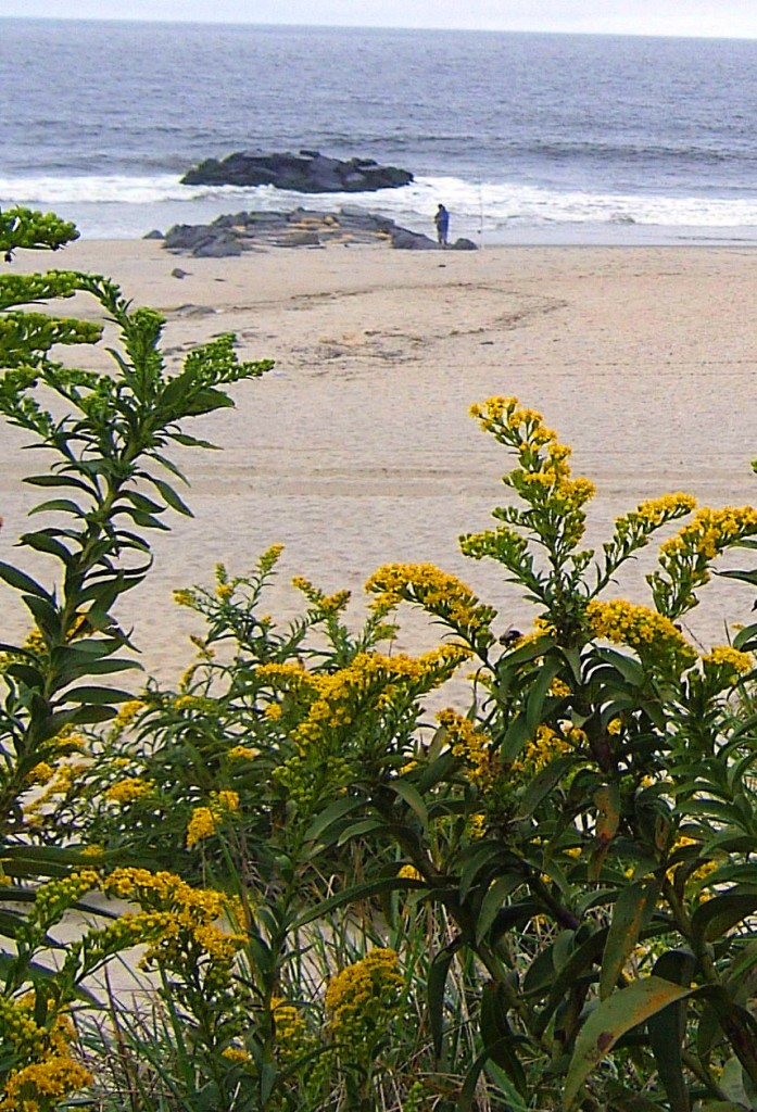 VIEW OF JERSEY SHORE FISHERMAN FOR VEGETATED DUNE