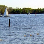 SAIL BOATING & GEESE IN A ROW ON THE RIVER