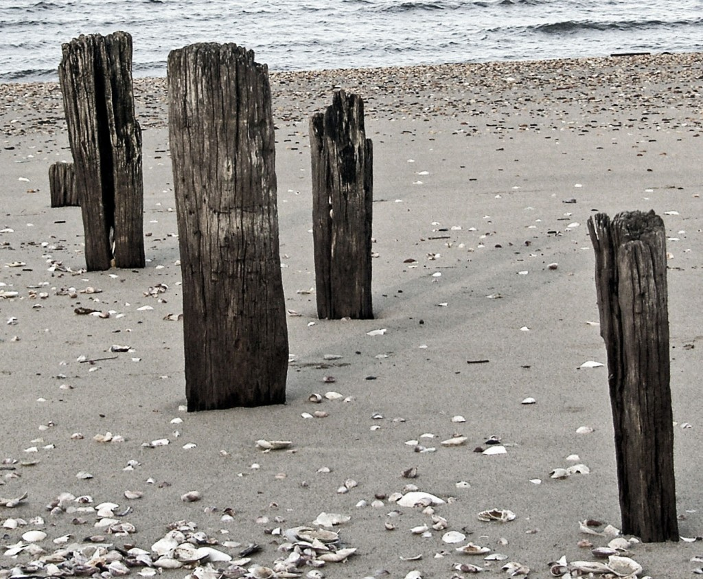 Black & White Beach Wood Pilings