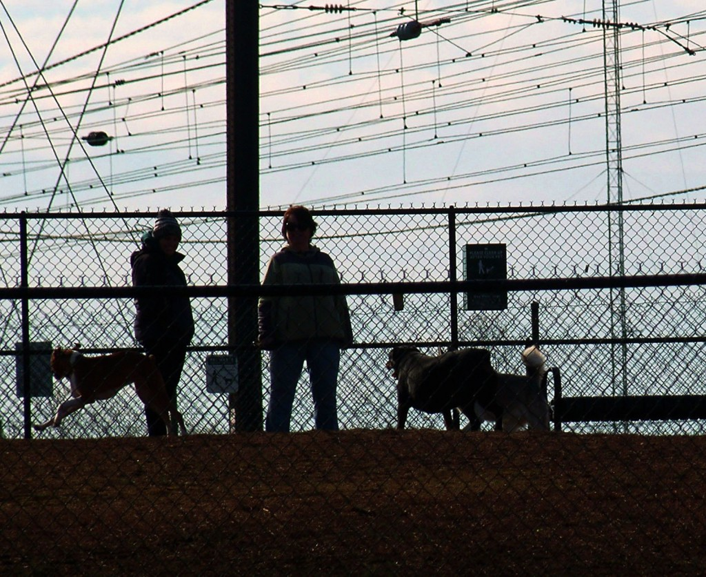 Dogs & Owners Silhouette In Dog Park