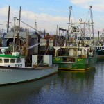Fishing Boats Tied Up In Port