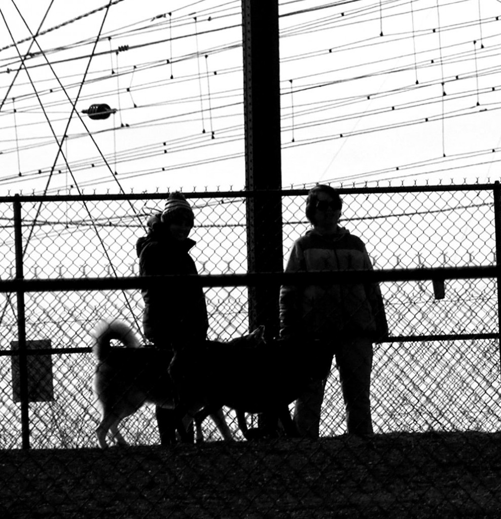 Dog Park Silhouette Of Dogs & Owners