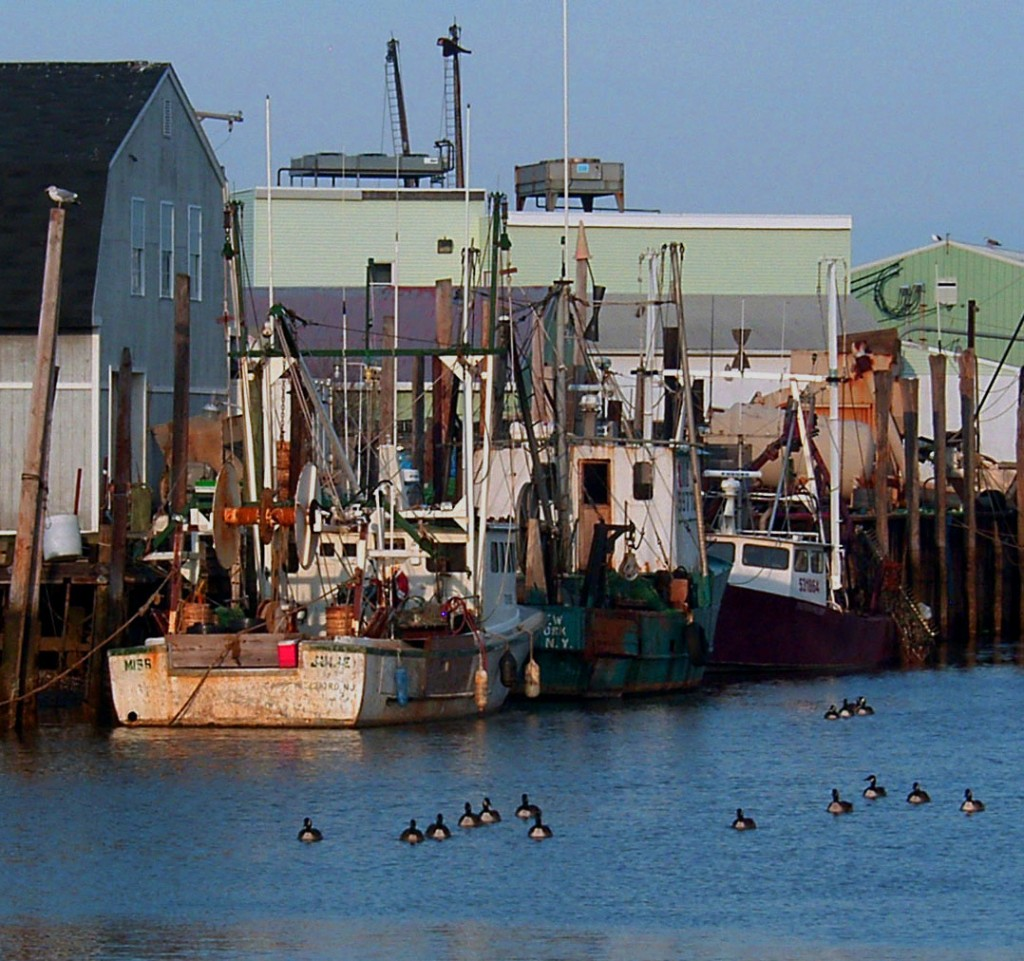 Geese Swimming Past Commercial Fishing Boats
