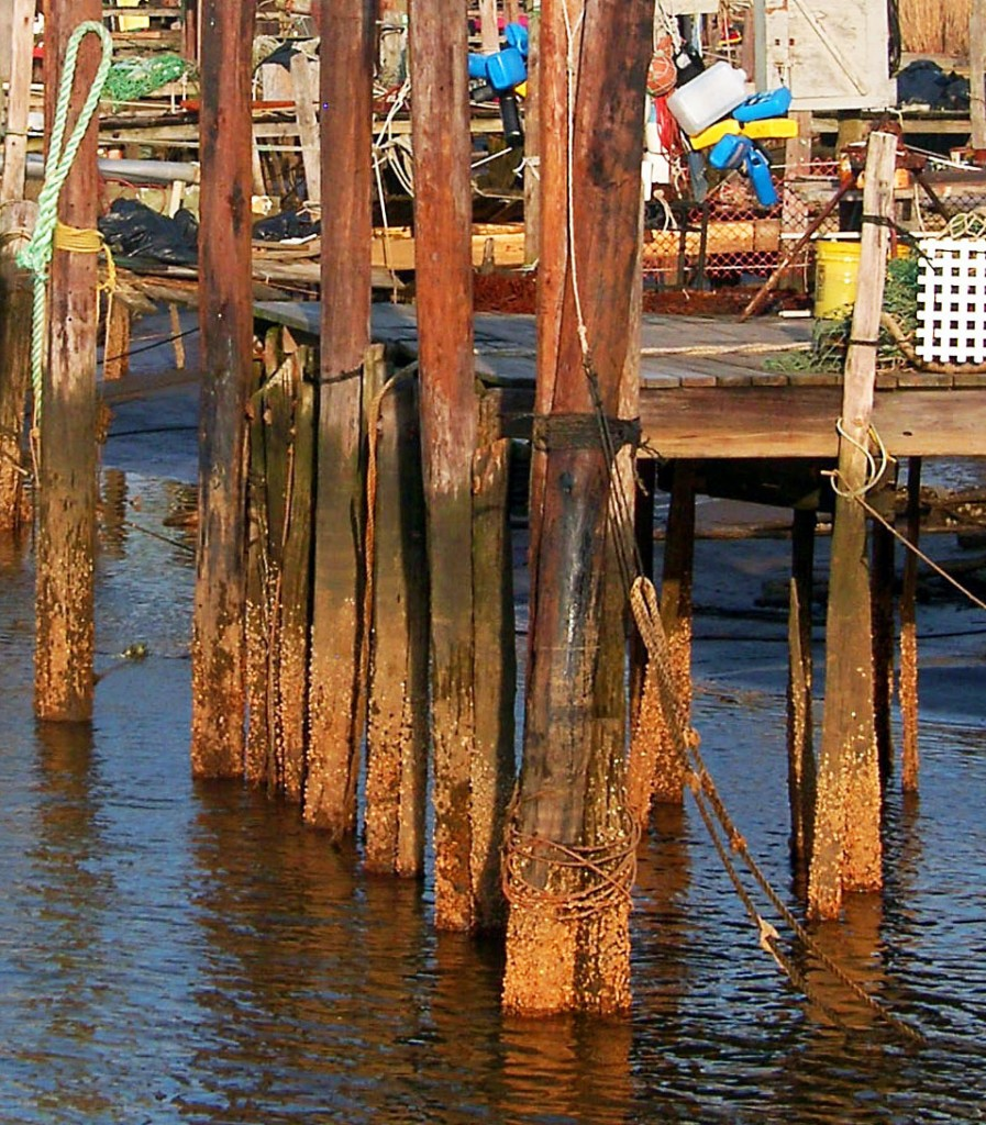 pier pilings bing images