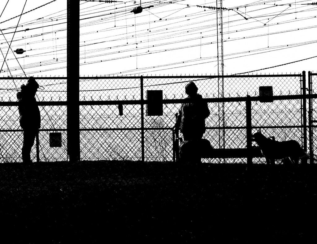 Silhouettes Of Pets & Owners In Dog Park