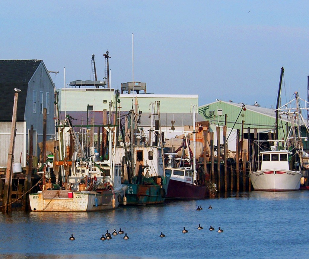 Small Fleet Of Fishing Boats With Small Gaggle Of Geese In New Jersey