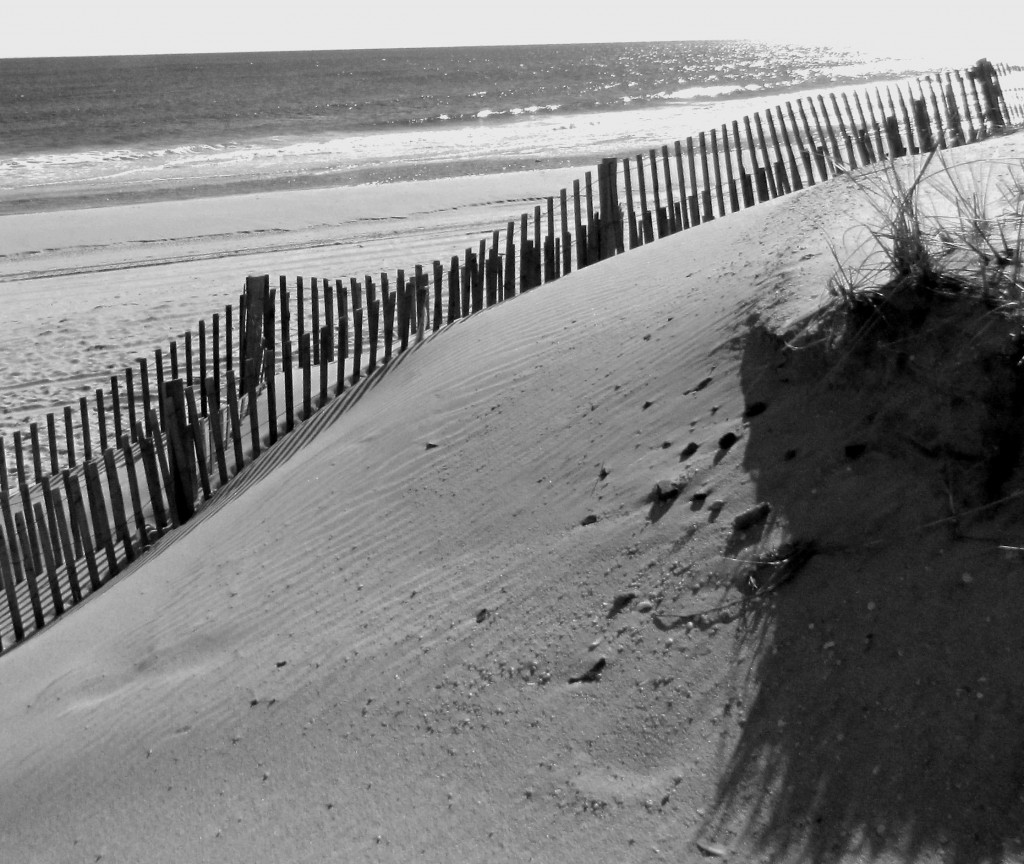 Black & White Seaside Beach Sand Dune