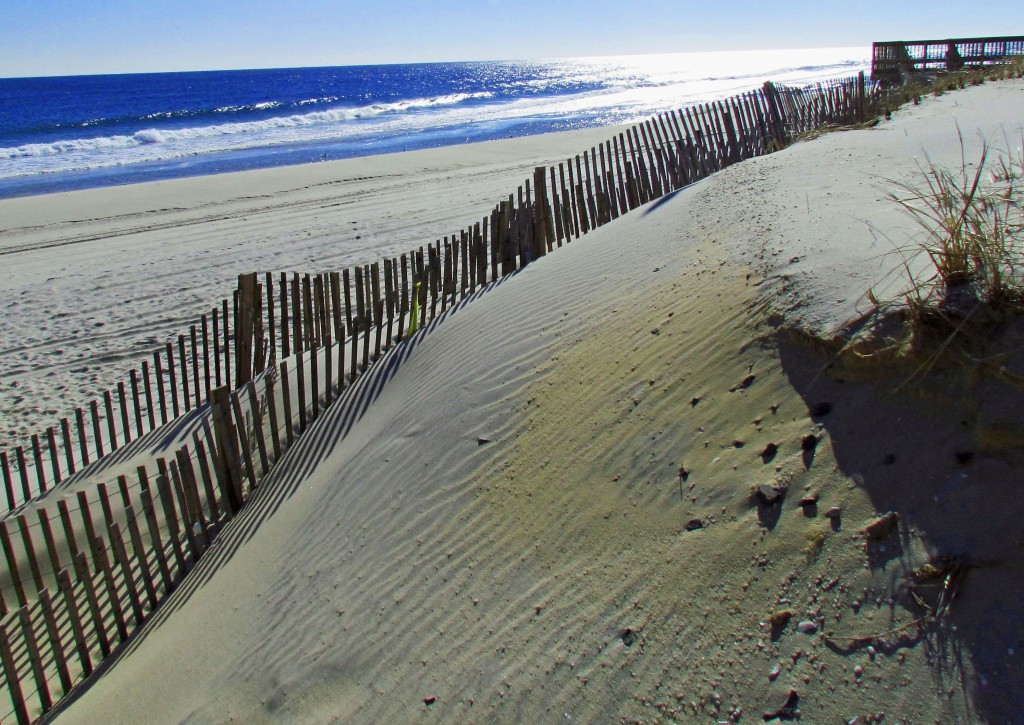 Fenced Beach Sand Dune In Seaside NJ