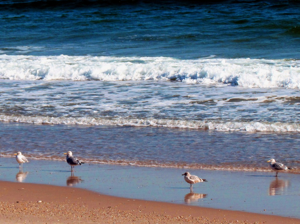 Morning Reflections Of Gulls At The Beach
