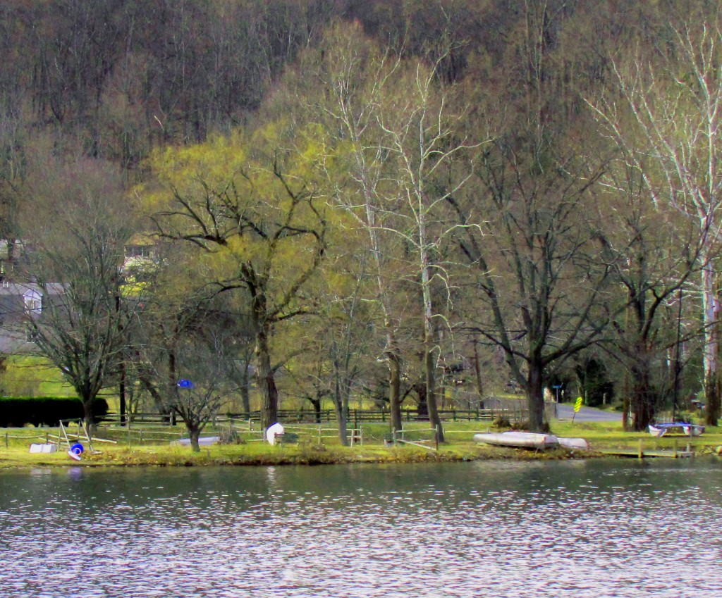 Mountain Lake Shoreline In Early Spring