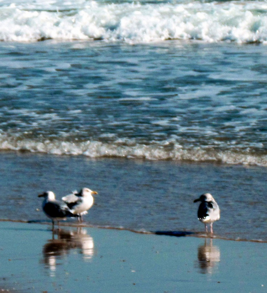 Reflecting Sea Gulls At Jersey Shore
