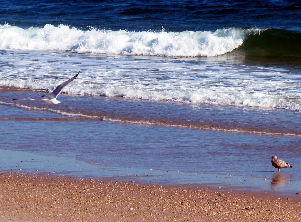 Sea Gulls At Jersey Shore Waters Edge