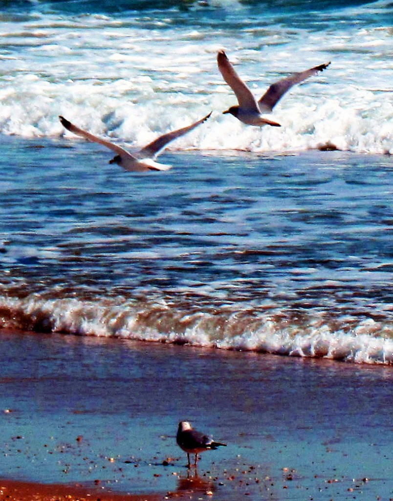 Sea Gulls At The Shore