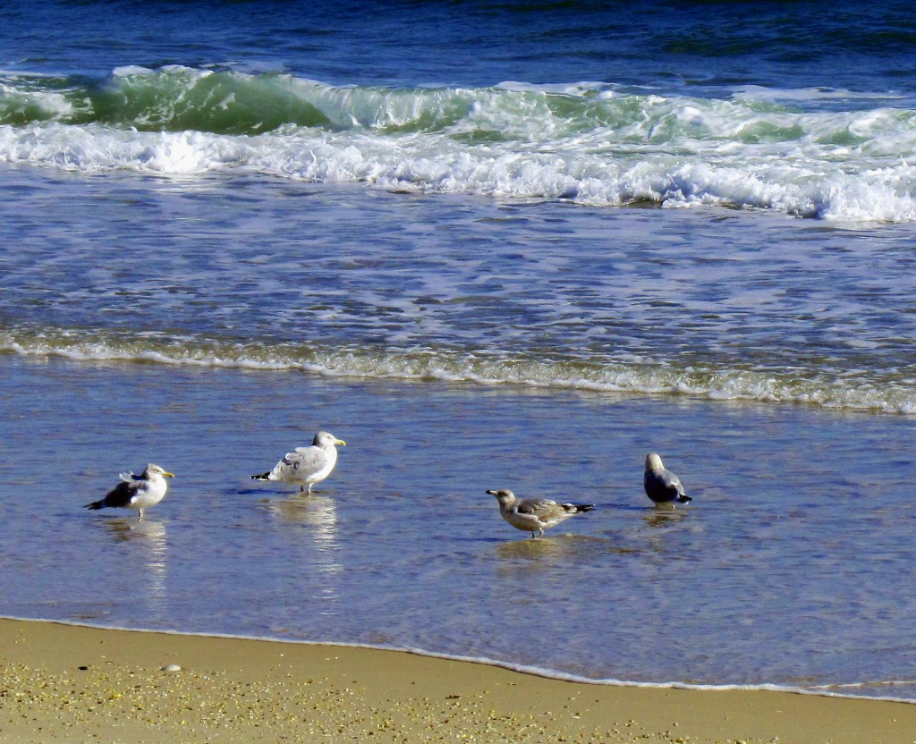 Sea Gulls At Waters Edge On Jersey Shore Beach