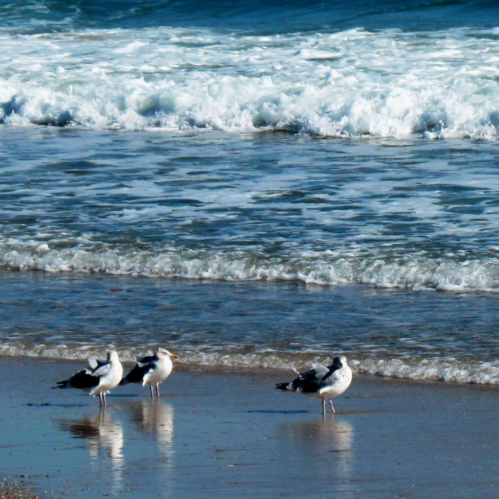 Sea Gulls Reflecting On The Beach
