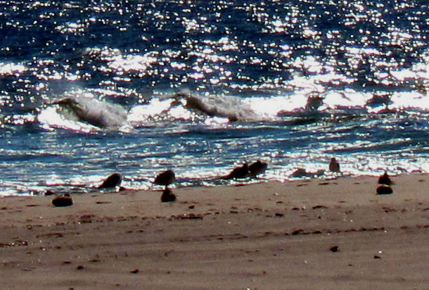 Silhouettes Of Sea Gulls On The Waters Edge