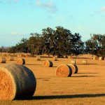 Hay Rolls In Central Florida