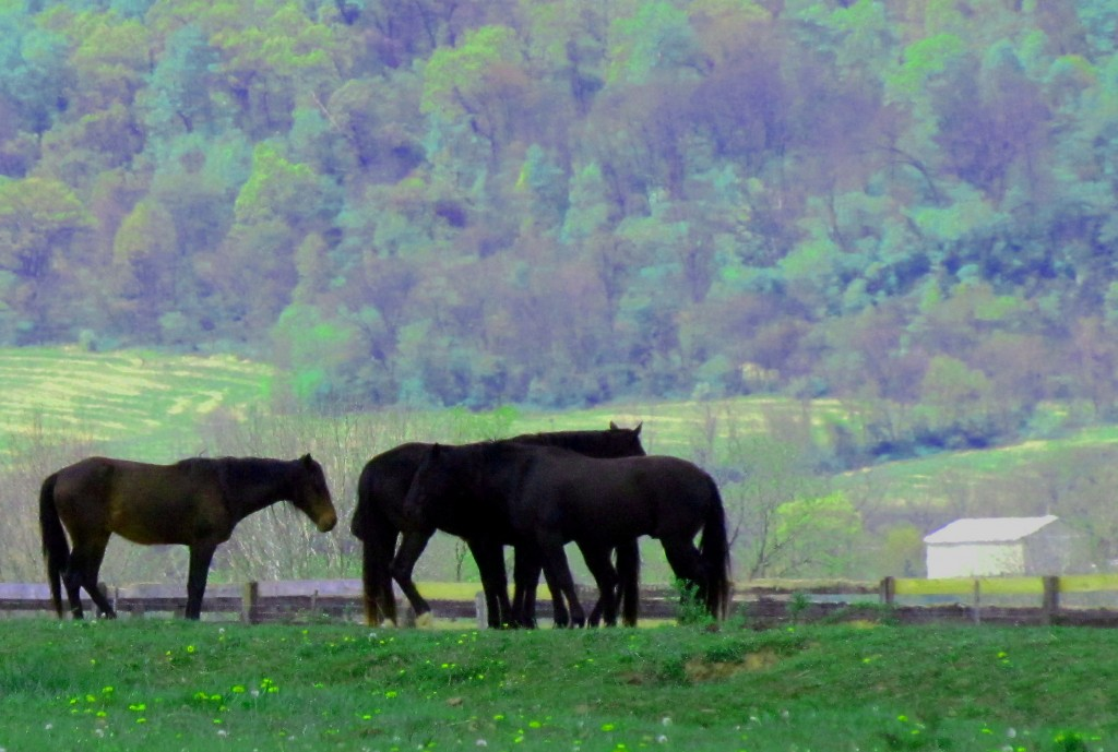 Small Gathering Of Horses In Hunterdon County New Jersey