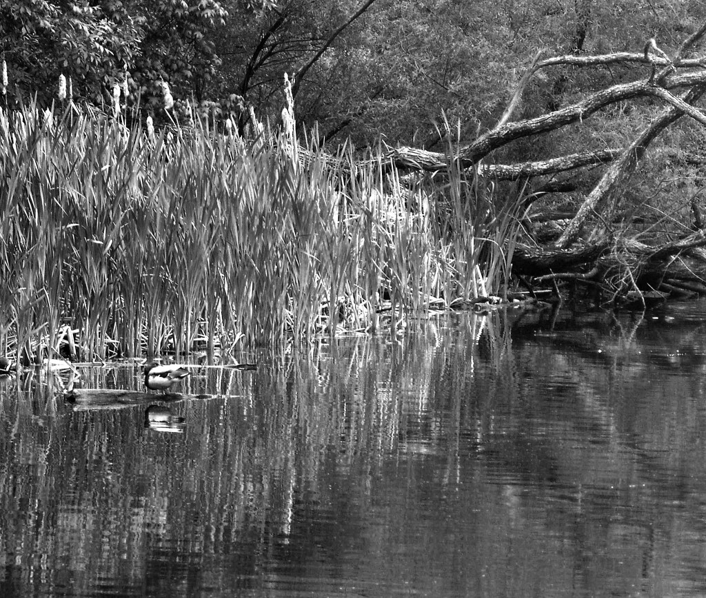 Black & White Of Late Morning Lake Reflections